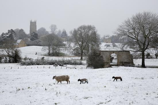 stuart-black-st-james-church-and-sheep-with-lambs-in-snow-chipping-campden-cotswolds