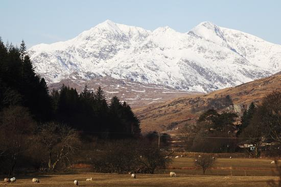 stuart-forster-mount-snowdon-capped-with-snow-as-welsh-sheep-graze-on-a-sunny-spring-day-snowdonia-national-park