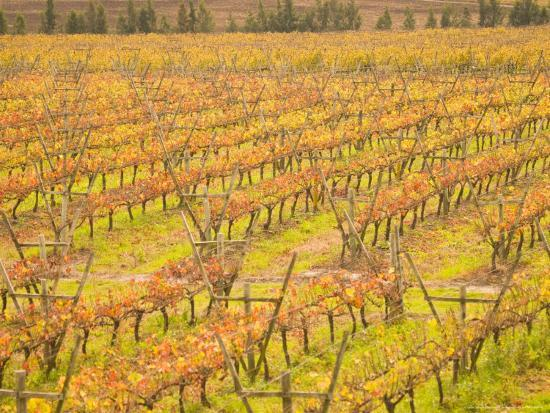 stuart-westmoreland-vineyards-in-fall-colors-juanico-winery-uruguay
