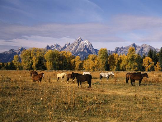 stuart-westmorland-horses-on-moran-junction-at-grand-teton-national-park-wyoming-usa