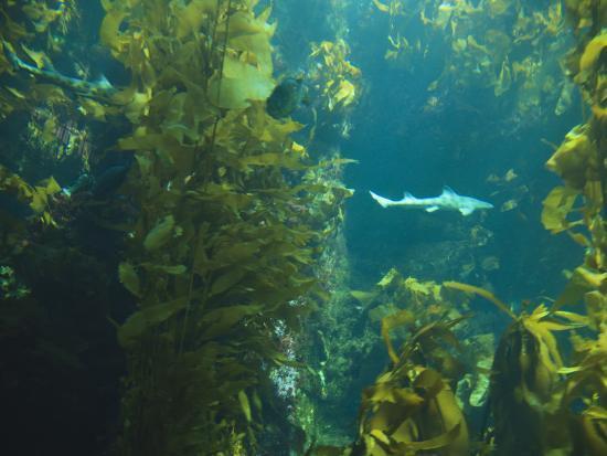 stuart-westmorland-monterey-bay-aquarium-cannery-row-monterey-central-california-coast-usa