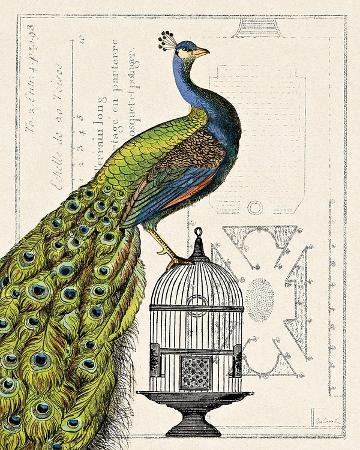 sue-schlabach-peacock-birdcage-i