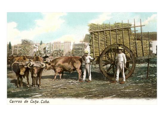 sugar-cane-cart-cuba