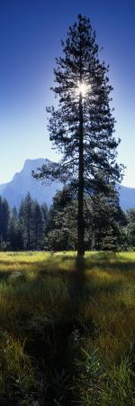 sun-behind-pine-tree-half-dome-yosemite-valley-california-usa