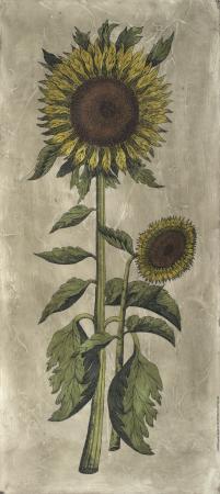 sunflower-fresco-i
