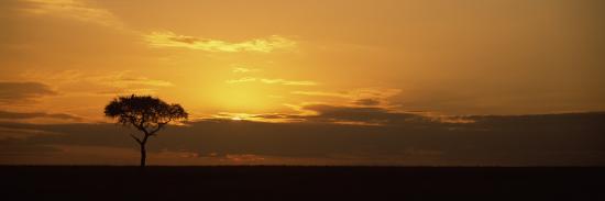 sunrise-over-a-landscape-masai-mara-national-reserve-kenya