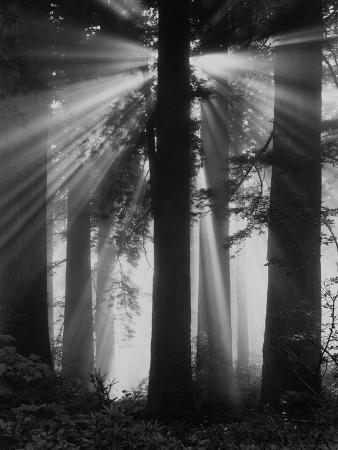 sunshine-in-redwood-forest