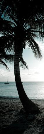 susan-bryant-cool-bimini-palm-ii