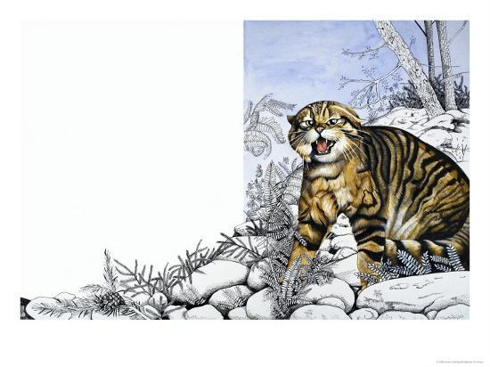 susan-cartwright-nature-s-kingdom-hunter-of-the-highlands-the-wildcat