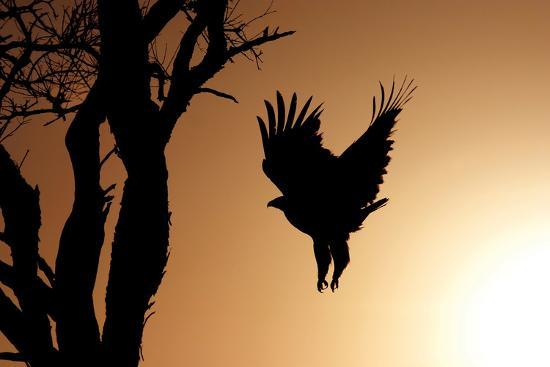 susann-parker-eagle-rising
