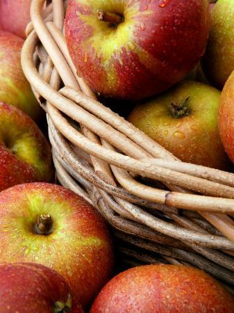 susie-mccaffrey-cox-s-apples-apples-in-basket
