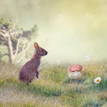 svetlana-foote-wild-rabbit-standing-up-in-the-grass