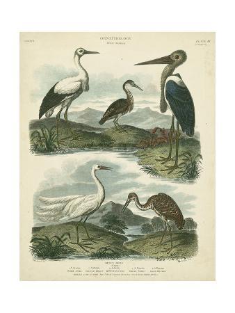 sydenham-teast-edwards-heron-and-crane-species-i