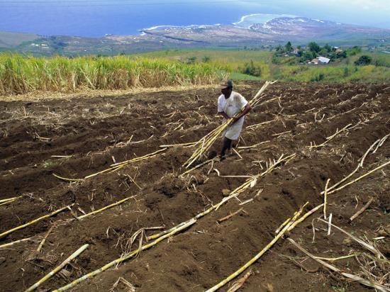 sylvain-grandadam-sugar-cane-fields-reunion-island-indian-ocean