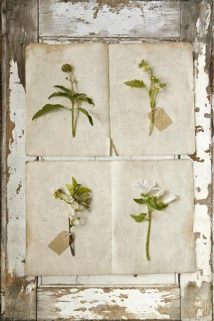 symposium-design-botanical-board-2