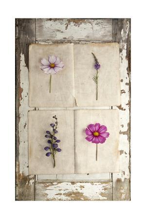 symposium-design-botanical-board-4