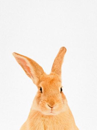 tai-prints-rabbit