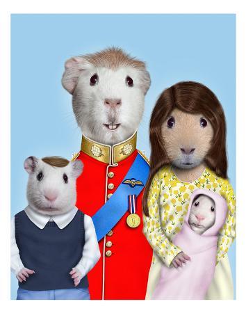 takkoda-royal-guinea-pigs-pets-rock