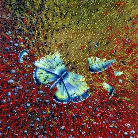 tamas-galambos-invasion-of-ants-1996