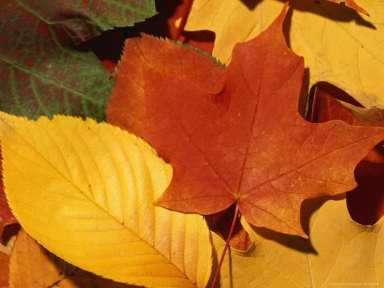 taylor-s-kennedy-colourfull-fall-leaves-lie-in-a-pile
