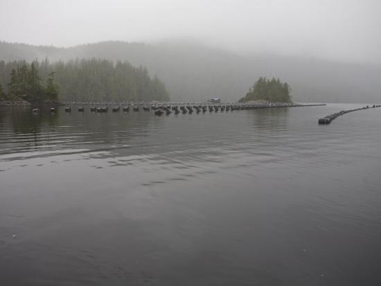 taylor-s-kennedy-oyster-farm-in-a-calm-inlet-of-clayoquot-sound