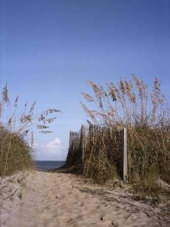 taylor-s-kennedy-sea-oats-line-the-path-to-the-beach-on-the-outer-banks