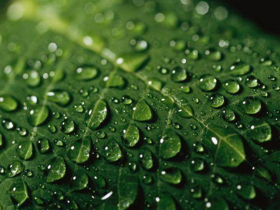 taylor-s-kennedy-water-drops-and-droplets-on-a-leaf