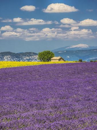 terry-eggers-france-provence-old-farm-house-in-field-of-lavender-and-sunflowers