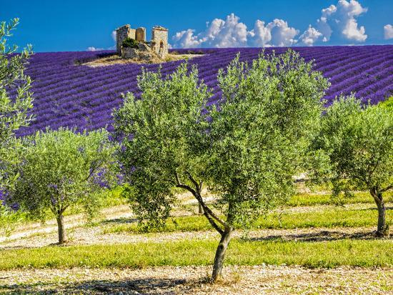 terry-eggers-france-provence-old-farm-house-in-field-of-lavender