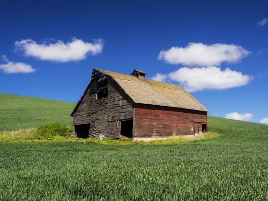 terry-eggers-old-red-barn-in-a-field-of-spring-wheat