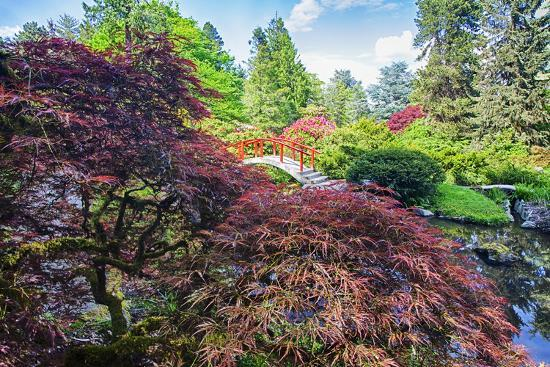 terry-eggers-seattle-kubota-gardens-spring-flowers-and-japanese-maple-with-moon-bridge-in-reflection