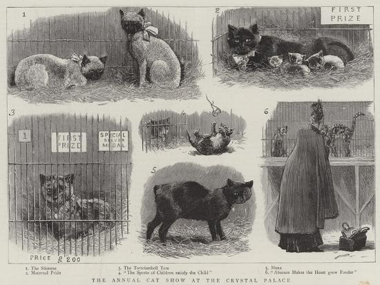 the-annual-cat-show-at-the-crystal-palace