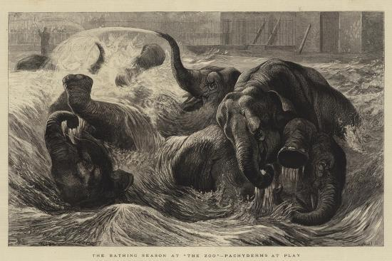 the-bathing-season-at-the-zoo-pachyderms-at-play