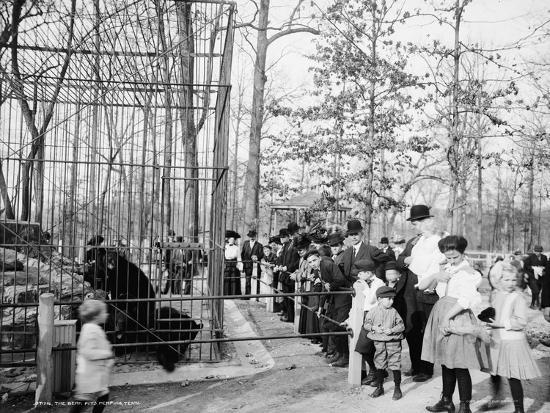 the-bear-pits-memphis-tennessee-c-1900-20