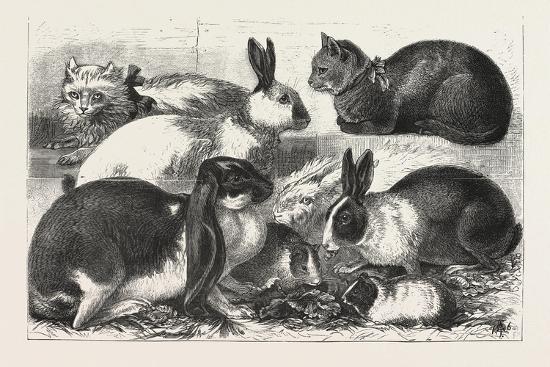 the-cat-rabbit-and-guinea-pig-show-at-the-alexandra-palace-1876-uk