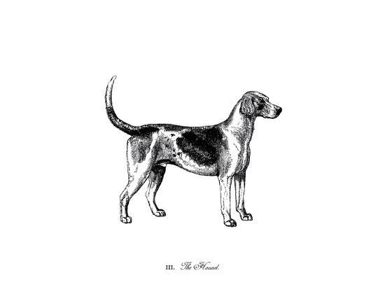 the-chelsea-collection-hound