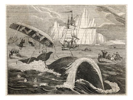 the-crew-in-danger-a-small-whaling-vessel-is-overturned-by-a-whale