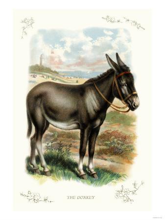 the-donkey