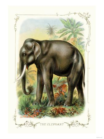 the-elephant