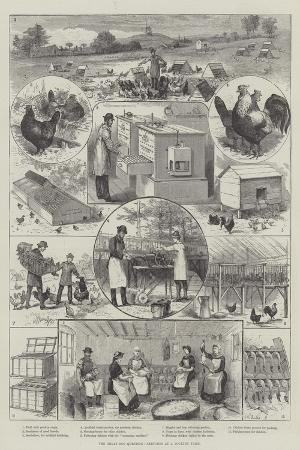 the-great-egg-question-sketches-at-a-poultry-farm