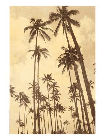thea-schrack-palm-vista-v