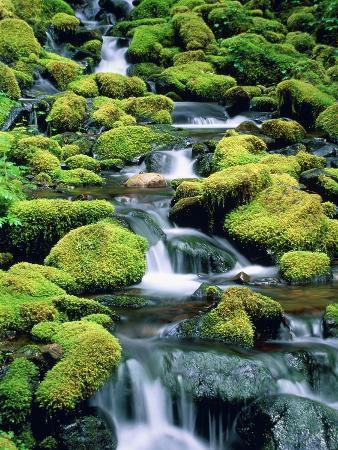 theo-allofs-usa-washington-olympic-national-park-creek-with-moss-and-rocks
