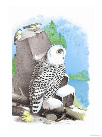 theodore-jasper-the-snow-owl