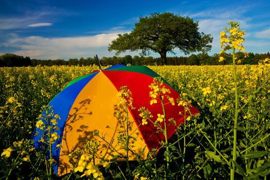 thomas-ebelt-sunshade-brightly-rest-in-the-colza-field-at-the-schleswig-holstein-county