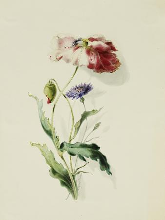 thomas-holland-a-scarlet-poppy-and-a-cornflower