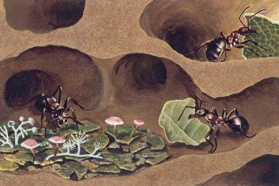 three-ants-in-an-anthill