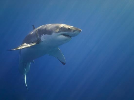 tim-davis-shark-in-open-water