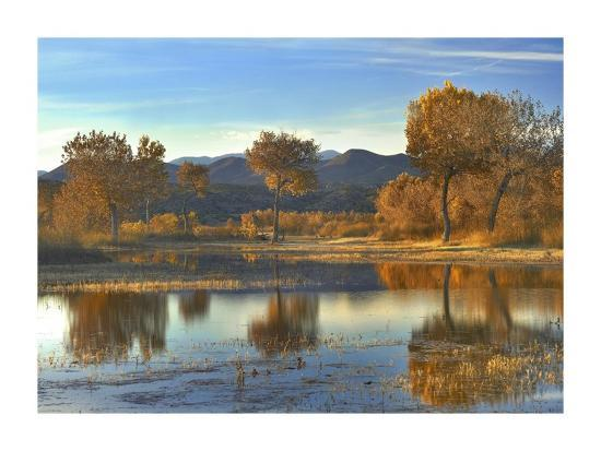 tim-fitzharris-cottonwood-trees-and-willows-fall-foliage-bosque-del-apache-national-wildlife-refuge-new-mexico