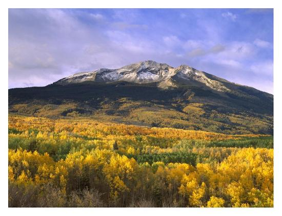 tim-fitzharris-east-beckwith-mountain-and-trees-in-fall-color-gunnison-national-forest-colorado