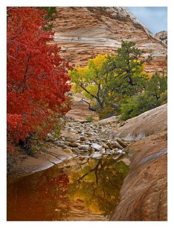tim-fitzharris-maple-and-cottonwood-autumn-foliage-zion-national-park-utah